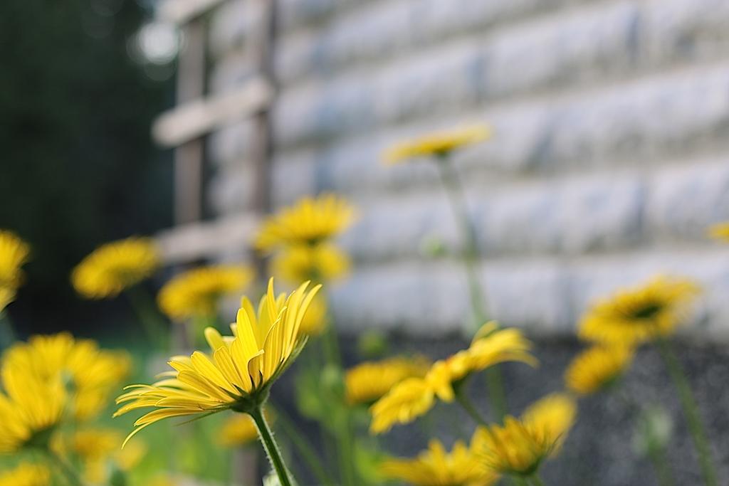 blommor kvällssol