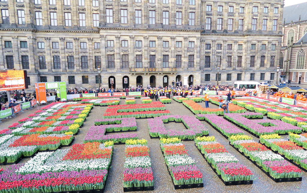 amsterdam dam square tulips