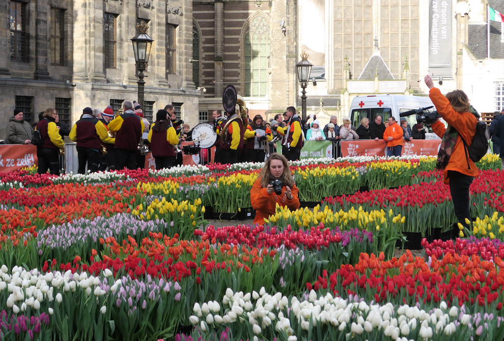 national tulipday 2016