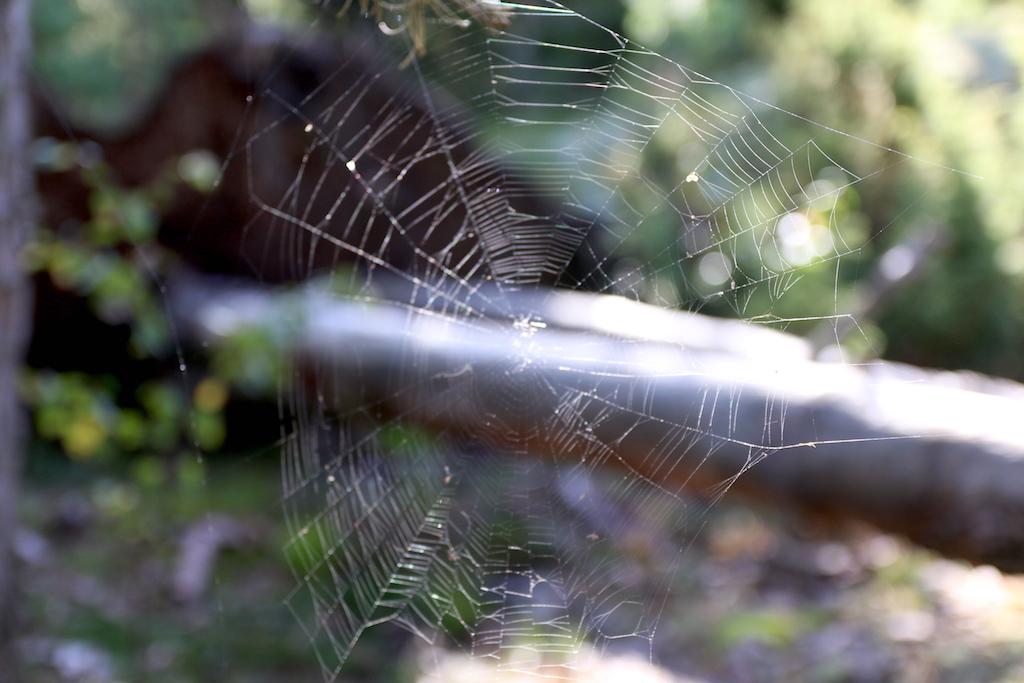 spindelvav