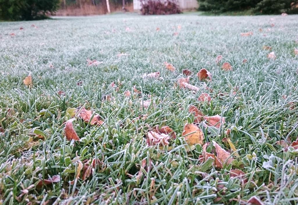 nattfrost-grasmatta